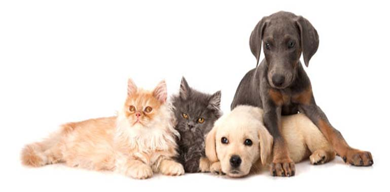 pet insurance new mexico picture